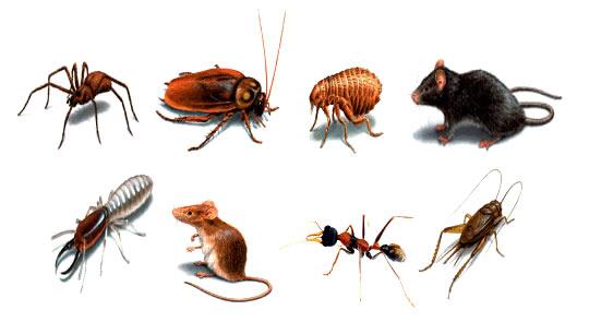Thuốc diệt côn trùng chất lượng cao giá rẻ