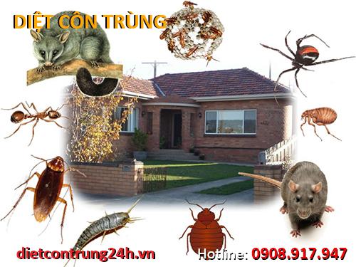 Một số nguyên tắc khi diệt côn trùng mà bạn nên biết