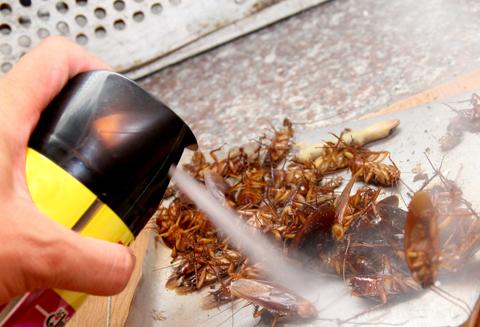 Cần thay đổi thuốc diệt côn trùng khi thấy chúng không còn hiệu quả