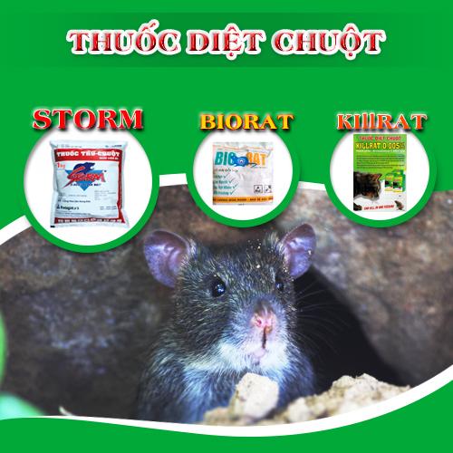 Cách dùng thuốc diệt chuột storm đúng cách